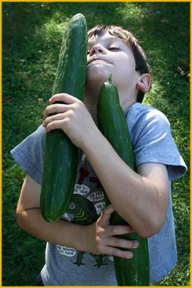 Harvest: Enormous Cucumber